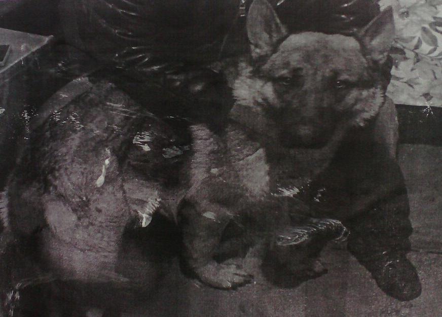 Фото пропавшей собаки в Зубчаниновке - 04.2017